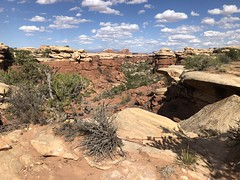 mushroom tops (jb10okie) Tags: summer 2019 nps vacation trip usa america utah canyonlands canyonlandsnationalpark