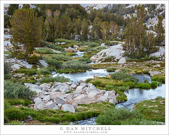 Stream And Meadow (G Dan Mitchell) Tags: inyo national forest john muir wilderness area bishop creek middle fork stream meadow flowers wildflowers green boulders water trees nature landscape california usa north america