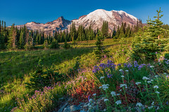 Mount Rainier Sunrise from Sunrise Viewpoint (Cole Chase Photography) Tags: mountrainier sunrise washington pacificnorthwest volcano