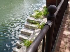 欄干の先に (arty822) Tags: 階段 大岡川 木洩れ日 欄干
