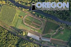 Aerial Oregon Coastal Flowers (Oregon Coastal Flowers) Tags: aerial oregon coastal flowers