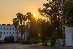 Sunrise Over the Sea of Galilee (SCSQ4) Tags: chasingsunrise favorite favoritepicture goldenhour israel israelbibletours mctv ministryofchristthetruevine palmtrees seaofgalilee sunrise tiberias travel vacation