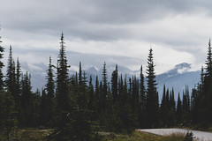 Revelstoke-Meadows-in-the-Sky-4 (_futurelandscapes_) Tags: mountains meadowsinthesky parkway trail revelstoke rockymountains bc britishcolumbia beautiful misty cloudy sunbeam view aerial above overhead vista borealforest alpine forest trees silhouettes sunset