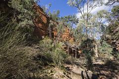 Vegetation on the Creek Bed (oz_lightning) Tags: australia canon6d canonef1635mmf4lis mountremarkablenp sa southernflindersranges geology landscape nature mountremarkablenationalpark southaustralia