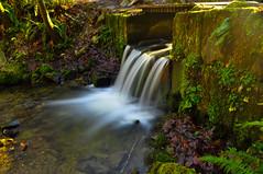 japanese gulch waterfall #3 (Matt Adolf Photography) Tags: longexposure wildlife waterfall river forest water japanesegulch gulch nature green wilderness walk mukilteo wa usa