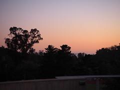 S9205100 SBAU Westmont Observatory to Santa Cruz Island beyond trees (SBAUstars) Tags: september 19 2019 sbau bacara westmont astronomy telescope santabarbara montecito goleta sunset channel ocean