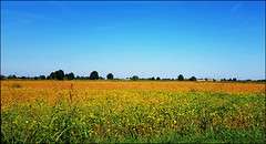 Campo di soia (Maulamb) Tags: soia campo campagna