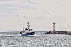 Le Retour ... (jmollien) Tags: port harbor bateau chalutier mouette oiseaux phare mer méditerrannée méditerraneansea occitanie