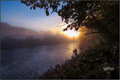 Early Morning. (Picture post.) Tags: landscape nature green autumn sunrise water mist river trees arbre brume reflections paysage