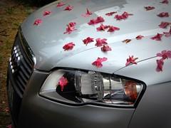 dopo la pioggia (fotomie2009) Tags: audi automobile car grey flowers fall oleander oleandro