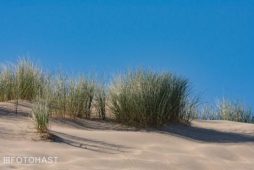 Nieuwe Duinen op de Maasvlakte