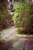 勝念寺の萩