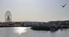 Le Port et la Roue... (Tonton Gilles) Tags: honfleur normandie grande roue oiseau de mer port bateaux soleil matin reflets paysage