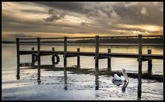 St Georges Basin Spring 2019 (itsallgoodamanda) Tags: wharf jetty pelican ocean amandarainphotography australia australianlandscape australianphotography australiassouthcoast jervisbayphotography jervisbay shoalhaven seascape sea seaside southcoast seascapephotography stgeorgesbasin sky sunset sunsetphotography coastallandscape coastal coastline colourfullandscape coast cloudreflections filters itsallgoodamanda beach landscape landscapecoast landscapephotography southeastcoast spring2019