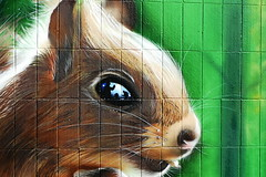 "Street Art ""In the eye of the squirrel"" (deetaah) Tags: hallesaale silberhöhe sbahntunnel streetart graffiti tiere dschungel"