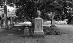 The New York City Marble Cemetery (neilsonabeel) Tags: nikonfm2 nikon nikkor cemetery blackandwhite newyorkcity manhattan film analogue gravestone tree