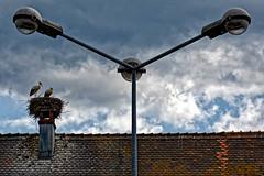Up (Eric@focus) Tags: lamppost roof tiles couple nest birds clouds alsace elzas vosges chimney cigognes ooievaars störche storks infinitexposure