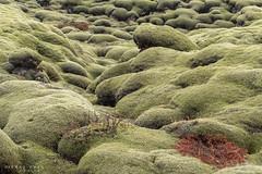 Au pays des Trolls (Papayankee33) Tags: lakilava boîtieretobjectifs natureetpaysages continentsetpays cielmétéo matériel neige mousse techniquephoto végétaux islande nikond750 europe nikon70200f4gvr is isl iceland skaftárhreppur suðurland