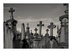 Cassel's crosses (Guillaume DELEBARRE) Tags: cemetery xt2 fuji france nordpasdecalais noiretblanc nb bw blackandwhite nord fujifilm xf1855 cross crosses monochrome flandres cimetière croix cassel