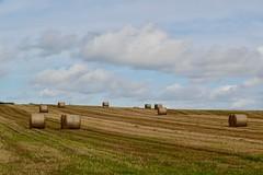 Getting the crops in (Ugborough Exile) Tags: swynnerton staffordshire midlands england uk sony rx100vi 2019