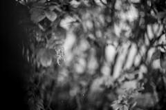 DSCF3243 (Piyushgiri Revagar) Tags: spider black scary insect web illustration arachnid halloween horror vector isolated white design nature fear danger creepy spooky silhouette spiderweb poison art cobweb animal bug background line element net tangled dark thread poisonous trap hanging dangerous corner network phobia arachnophobia venom sticky detail piyushgiri revagar kruti akruti 22
