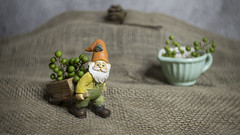 Preparing for Winter (DayBreak.Images) Tags: tabletop stilllife miniature garden gnome figure cup berries canondslr lensbabyburnside35 ringlight lightroom