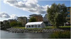 Flyget På Hägernäsviken - 100 Års Jubileum - Hägernäs Strand (lagergrenjan) Tags: flyget på hägernäsviken 100 års jubileum hägernäs strand tält