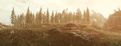 SkyrimSE (FotoScreenshot) Tags: sse tesv ingamephotography fotoscreenshot virtualphotography skyrimse landscape outside nature trees yellow