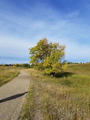 20190923_100918 (catfishkempster) Tags: walking dogs calgary alberta nosehillpark fitness nature naturephotography