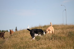 IMG_0022 (catfishkempster) Tags: walking dogs calgary alberta nosehillpark fitness nature naturephotography