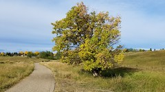 20190923_100913 (2) (catfishkempster) Tags: walking dogs calgary alberta nosehillpark fitness nature naturephotography