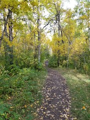 20190923_100607 (catfishkempster) Tags: walking dogs calgary alberta nosehillpark fitness nature naturephotography
