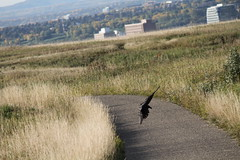 IMG_9932 (catfishkempster) Tags: walking dogs calgary alberta nosehillpark fitness nature naturephotography