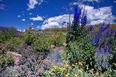 Flowers at Angel Fire RV Resort 14 (Largeguy1) Tags: approved blue sky clouds flowers canon 5dsr