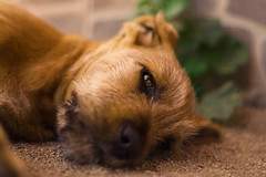 WF.013 (Wonder Fotografías) Tags: dog perro cachorro animal doggy natural summer wild baby nature portrait retrato