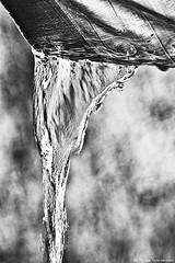 Todas las lágrimas (Blas Torillo) Tags: puebla méxico mexico agua water lluvia rain toldo awning exteriores outdoors arte art fineart fineartphotography blancoynegro byn bn blackandwhite bnw bw luznatural naturallight foco enfoque focus bokeh fotografíaprofesional professionalphotography fotógrafosmexicanos mexicanphotographers nikon d5200 nikond5200