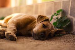 WF.012 (Wonder Fotografías) Tags: dog perro cachorro animal doggy natural summer wild baby nature portrait retrato