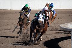 Century Downs Racing (tallhuskymike) Tags: centurydowns racetrack racing horse jockey horses action 2019 outdoors race balzac alberta