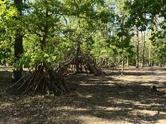 Grunewald_e-m10_1019229213 (Torben*) Tags: rawtherapee olympusomdem10 olympusm17mmf18 berlin grunewald forest wald baumhäuser treehouses