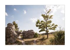 The Tree of Eternal Beauty (Thomas Listl) Tags: thomaslistl color nomansland av af tree nature light sunlight 24mm wideangle 24mmtse tiltshift stones sky blue landscape warm clouds beauty earth atmosphere ngc