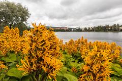 IMG_2421 (Adrian Royle) Tags: finland kuopio travel holiday park lake stones rocks balance outdoors flowers