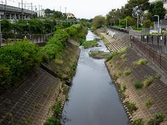 riverside protected river (kasa51) Tags: river riverside protected yokohama japan 和泉川 護岸整備 親水護岸