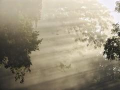 WELCOME TO THE JUNGLE (Lisa Plymell) Tags: lisaplymell nikon trees coolpixp900 rays