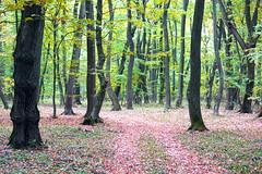 September forest (Dumby) Tags: landscape ilfov românia forest wood nature colors autumn fall peisaj foliage