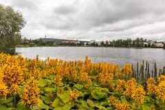IMG_2418 (Adrian Royle) Tags: finland kuopio travel holiday park lake stones rocks balance outdoors flowers