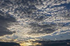 Más nubes al amanecer (José M. Arboleda) Tags: paisaje amanecer salidadelsol bosque árbol montaña nube cielo popayán colombia canon eosrp rf24240mmf463isusm josémarboledac