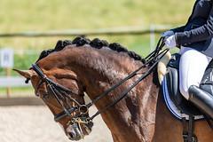 IMG_7044 (dreiwn) Tags: dressage dressurprüfung dressurreiten dressurpferd dressyr ridingarena reitturnier reiten reitverein reitsport ridingclub equestrian horse horseback horseriding horseshow pferdesport pferd pony pferde dressur dressuur canonef100400mmf4556lisiiusm