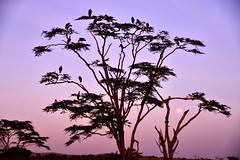 Serengueti (Enrica F) Tags: serengueti tanzania áfrica nikon safari wildlife nature landscape paisaje amanecer sunrise