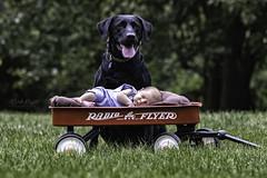 IMG_8284-Edit2 (alfredo.rossitto) Tags: child blacklabrador labrador blacklab newborn dog baby wagen