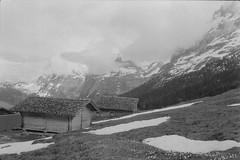Alpiglen (vladixp) Tags: ilford delta3200 delta3200800 ei800 6min 20c xtol stock praktica mtl5 flektogon k2 pf7250u 3600dpi 35mm yellowfilter filmscan 35mmfilm film bw bwfilm filmphotography negative scanned svizzera schweiz switzerland suisse wab grindelwald alpiglen